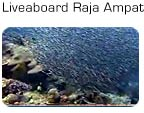 HD Video: Liveaboard til Raja Ampat i Indonesien