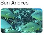 HD Video: Flot dykning ved San Andres i Colombia